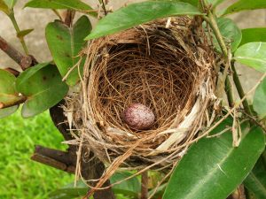 bird nest with one egg